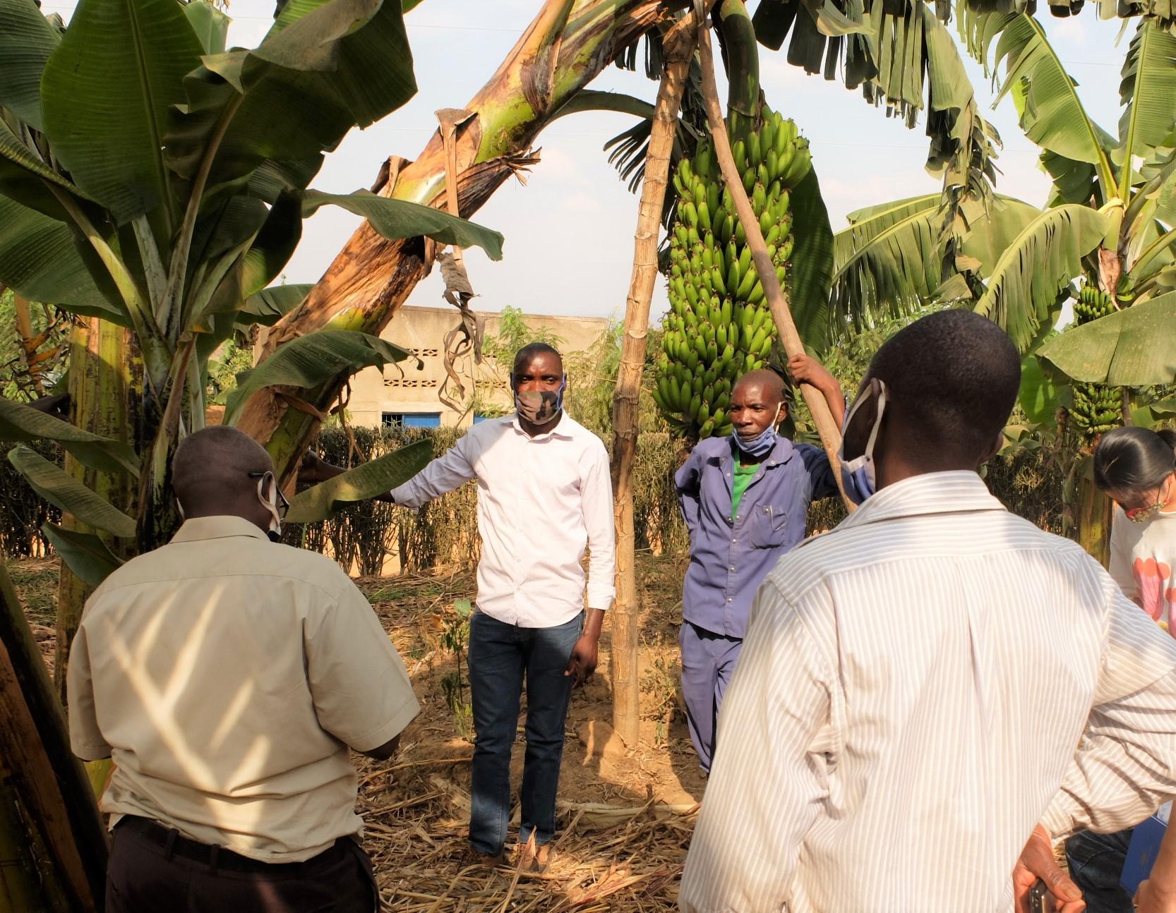 キレへの養豚組合の方々を連れて環境保全型農業に取り組む農家を訪問